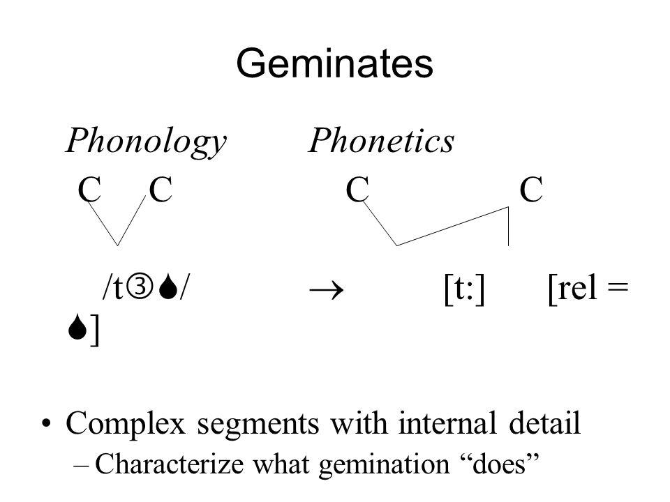 Geminates Phonology Phonetics C C C C /t/  [t:] [rel = ]